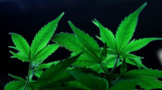 Crime and Courts: Marijuana gets a trade association, but Wisconsin needs a lobbyist