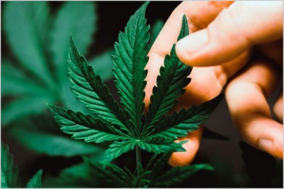Wisconsin: Governor Calls For Overhaul Of State's Marijuana Policies