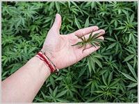 Wisconsin: Legislature Asked To Clarify Patchwork Of Marijuana Laws