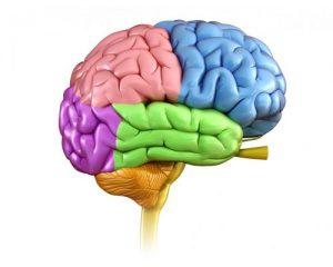 Cannabis and Brain Development